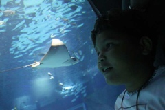 aquario_jun_2018-147