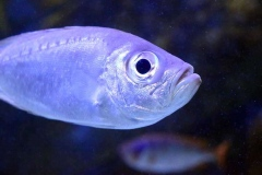 aquario_jun_2018-89