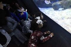 aquario_jun_2018-91