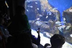 aquario_jun_2018-92